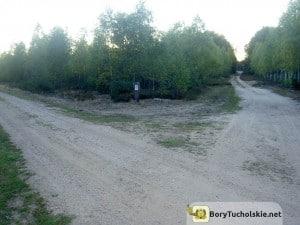 Leśne ścieżki w środku Borów Tucholskich