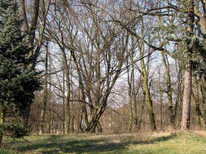Pałacowy park w Kamienicy gm. Gostycyn